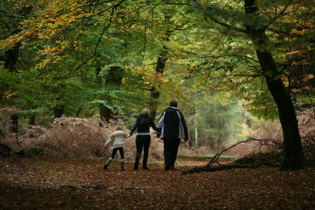 Get closer to nature in the New Forest - and adopt a greener lifestyle