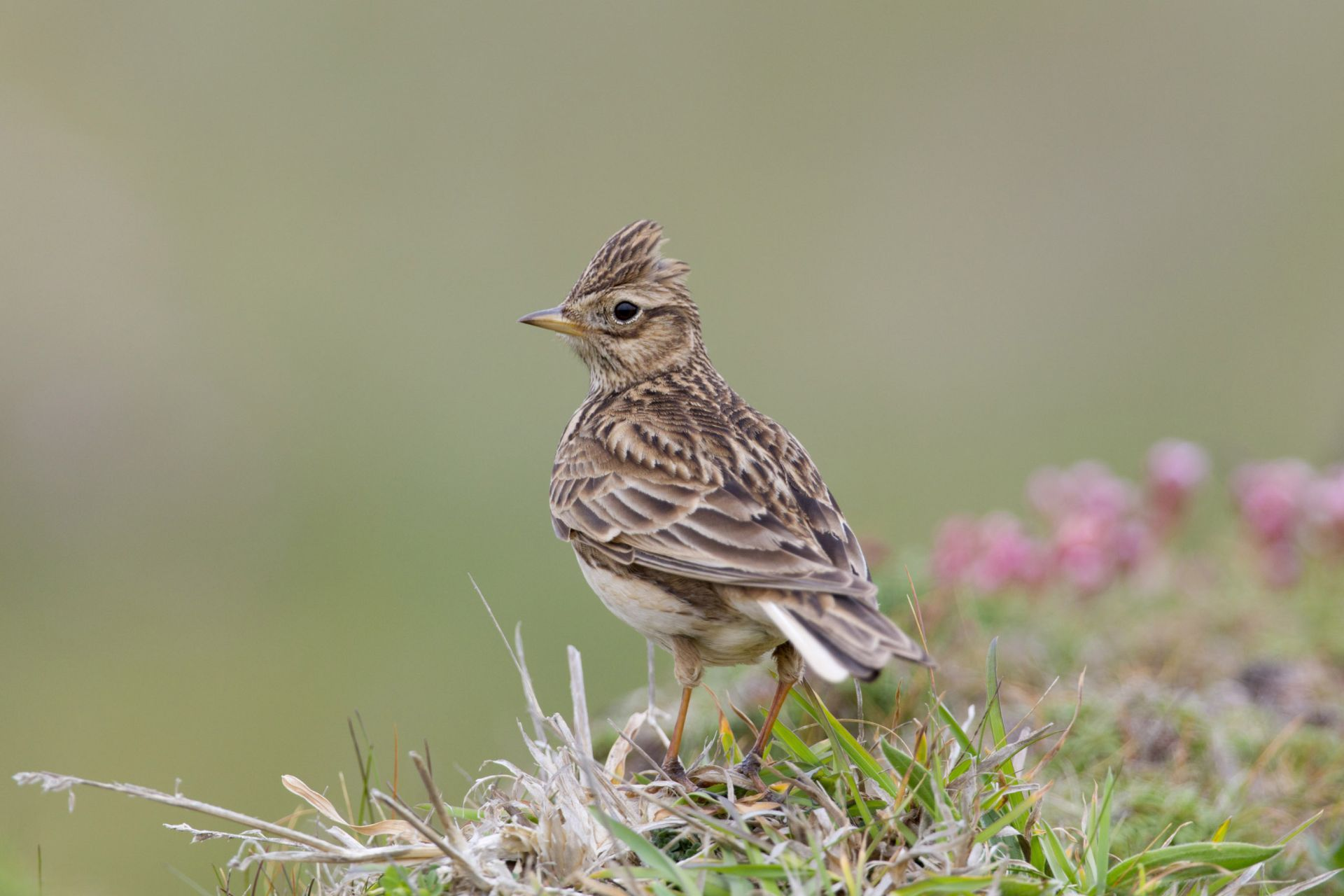 Stone firm delays half million pound project over concerns about possible nesting skylarks