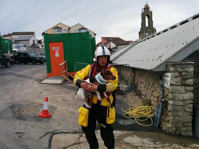 Spot the dog, back on dry land after falling over the cliffs at Anvil Point on Saturday, July 18. Pictures supplied by Swanage RNLI.