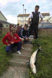 SICK JOKE: Gary Harvey, left, Mike Elliott and PC Garry Mason with the dolphin Picture: FINNBARR WEBSTER/F6970