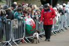 A police sniffer dog at work in front of members of the public awaiting the arrival of Prince Harry and Meghan Markle at Cardiff Castle.