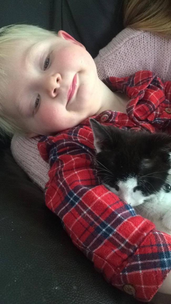 This is our 18month old son Charlie  and our cat mitzy. Since mitzy was a kitten they have had a very special, close bond. They even nap together!