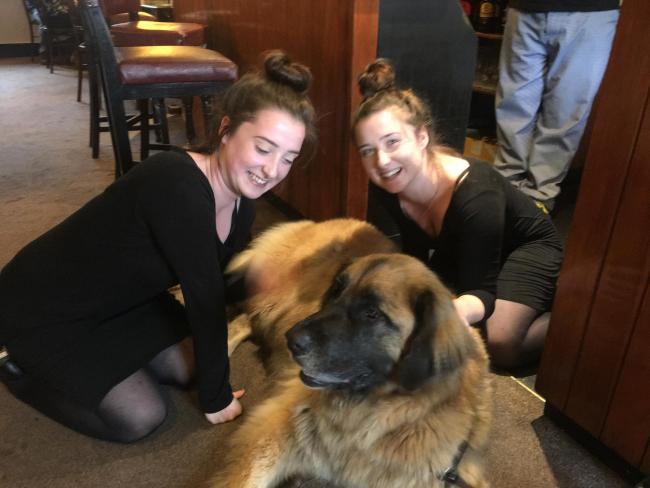 When twins met Hagrid.   Megan, Maisey and hangrid