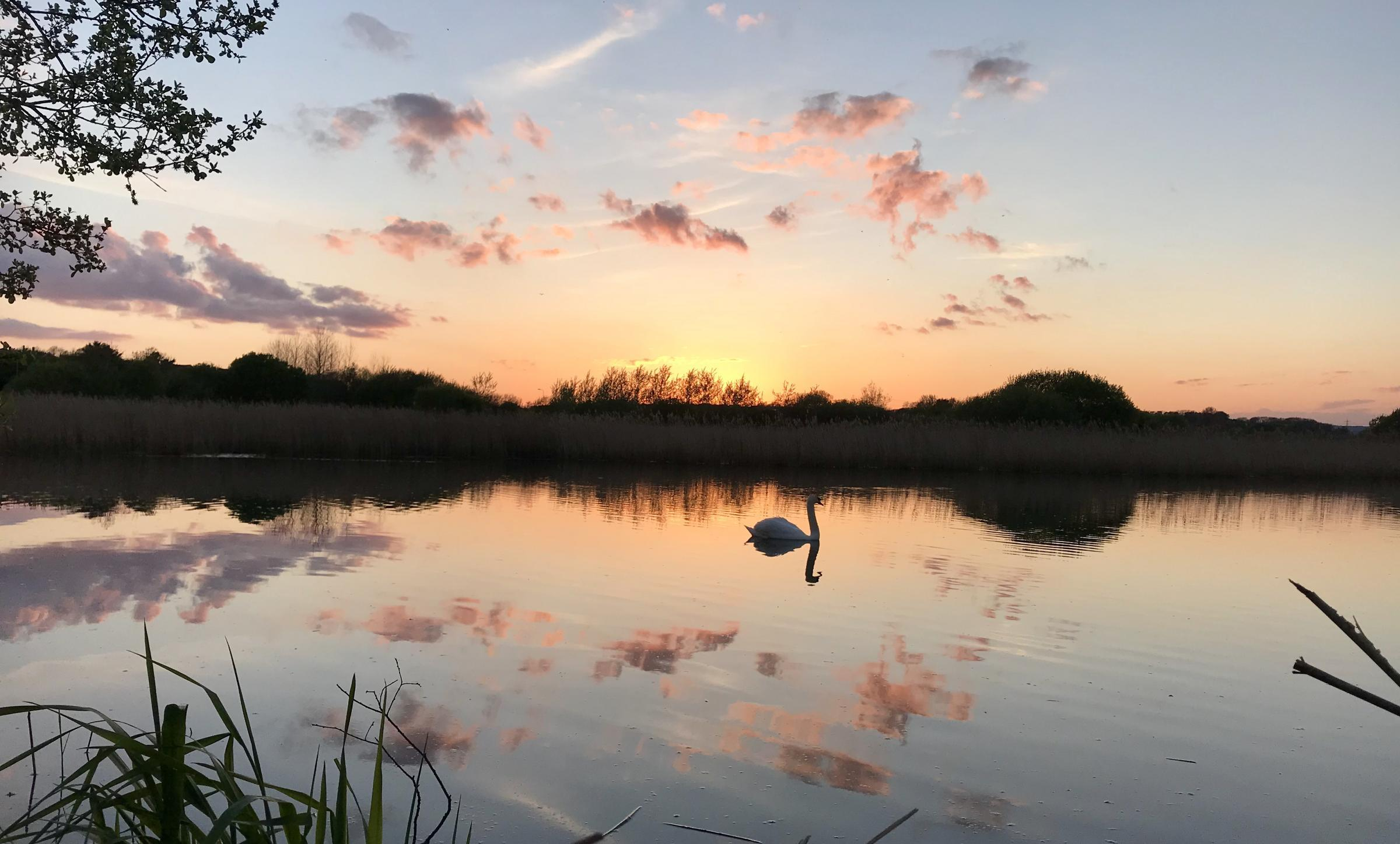 ALL SET: Evening dog walk around Radipole bird reserve, Weymouth, pictured by Jennie Fowler