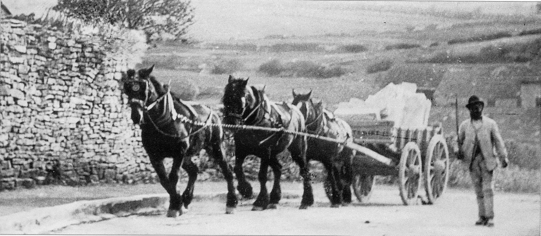 PURBECK PAST: A wagon on Steps Hill in Langton Matravers, taking stone to the bankers at Swanage in 1895 Picture courtesy of Purbeck Camera by Mike O'Hara and Ben Buxton
