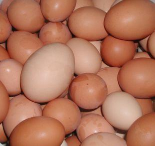 Dorset Echo: Shopkeepers ban youngsters from buying eggs