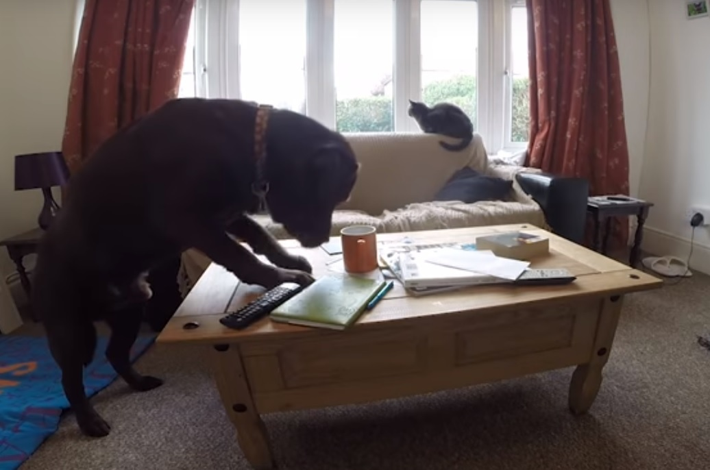 Watch: What your pets get up to when you're not there...and why you should ALWAYS check plug sockets