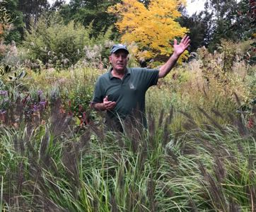 Masterclass: Ornamental Grasses