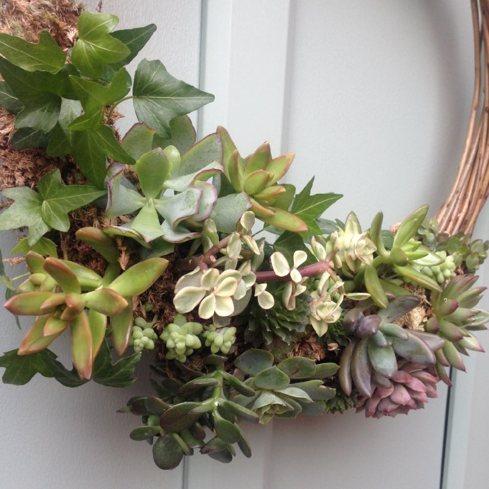 Workshop:  Festive Succulent Wreath Workshop with Tracy Standish and Laura Hall