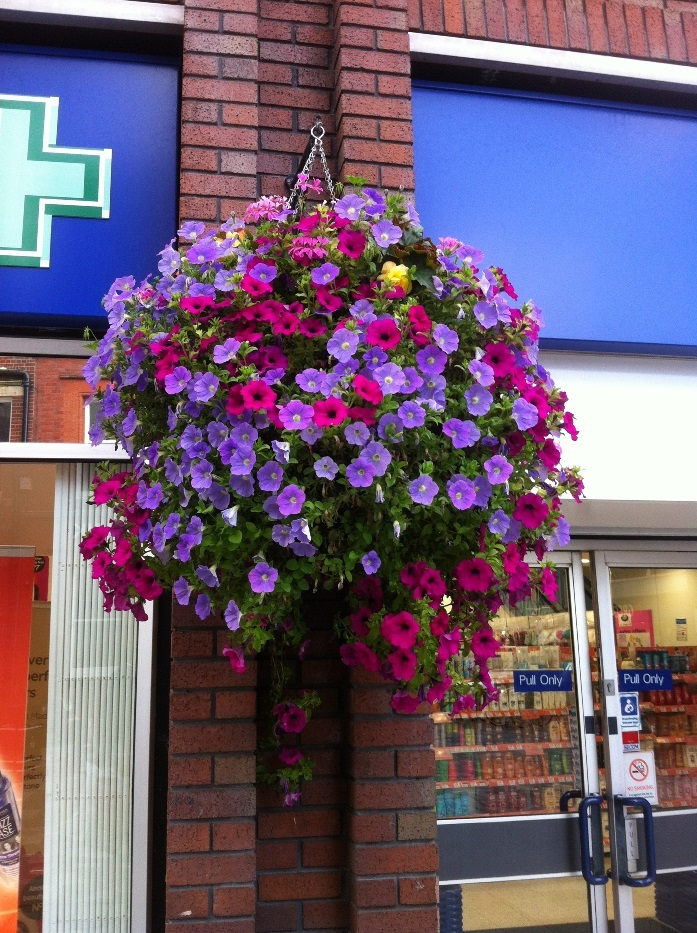 One of the hanging baskets in Weymouth town centre