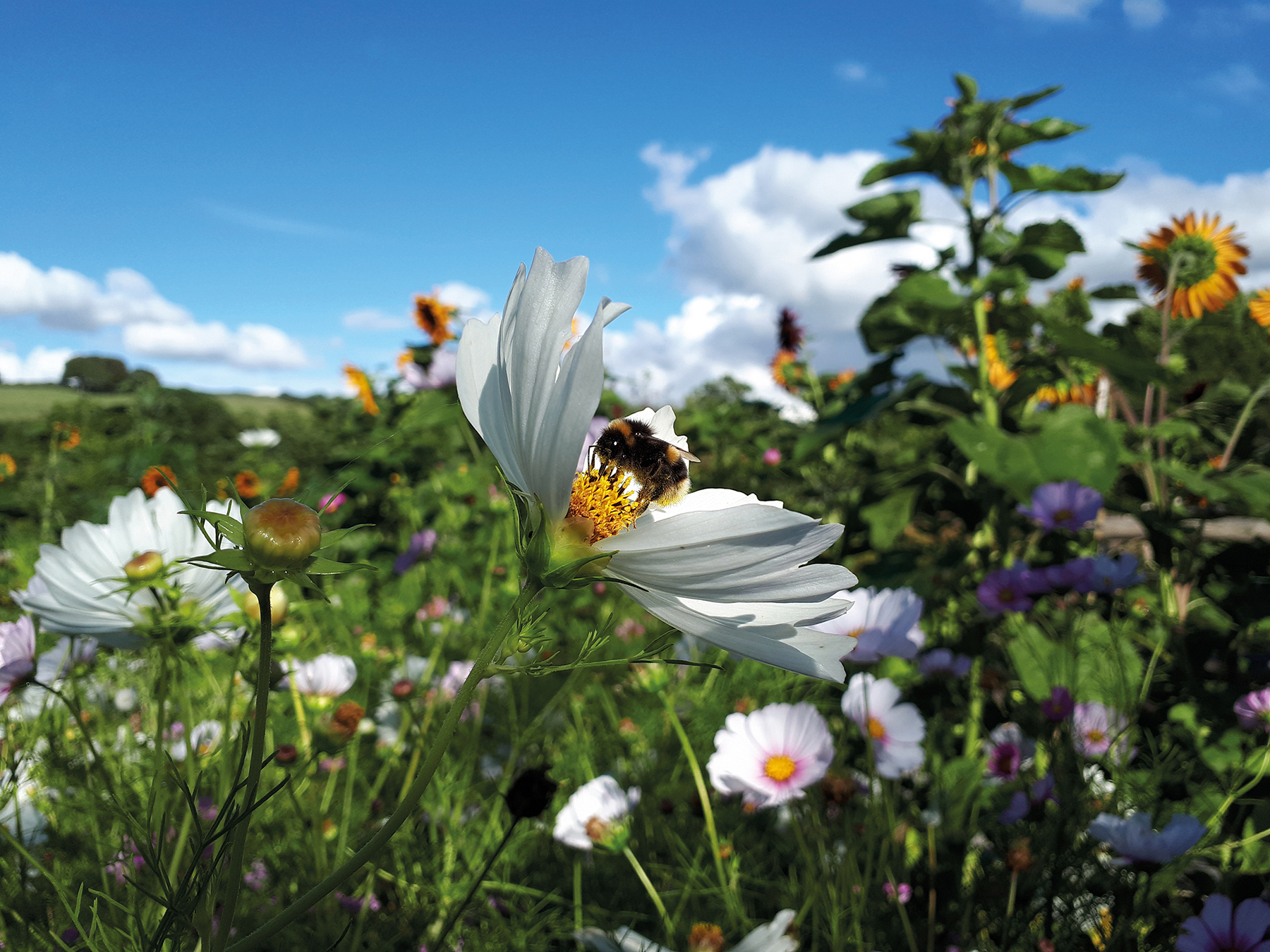 Dorset Wildlife Trust urging people to help the bees with its biggest campaign to date