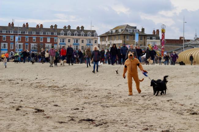 Dave Cumber wearing a Scooby Doo outfit and other dog walkers at the BIG Weymouth Walkies 2019 event. PIC: Dave Cumber vets