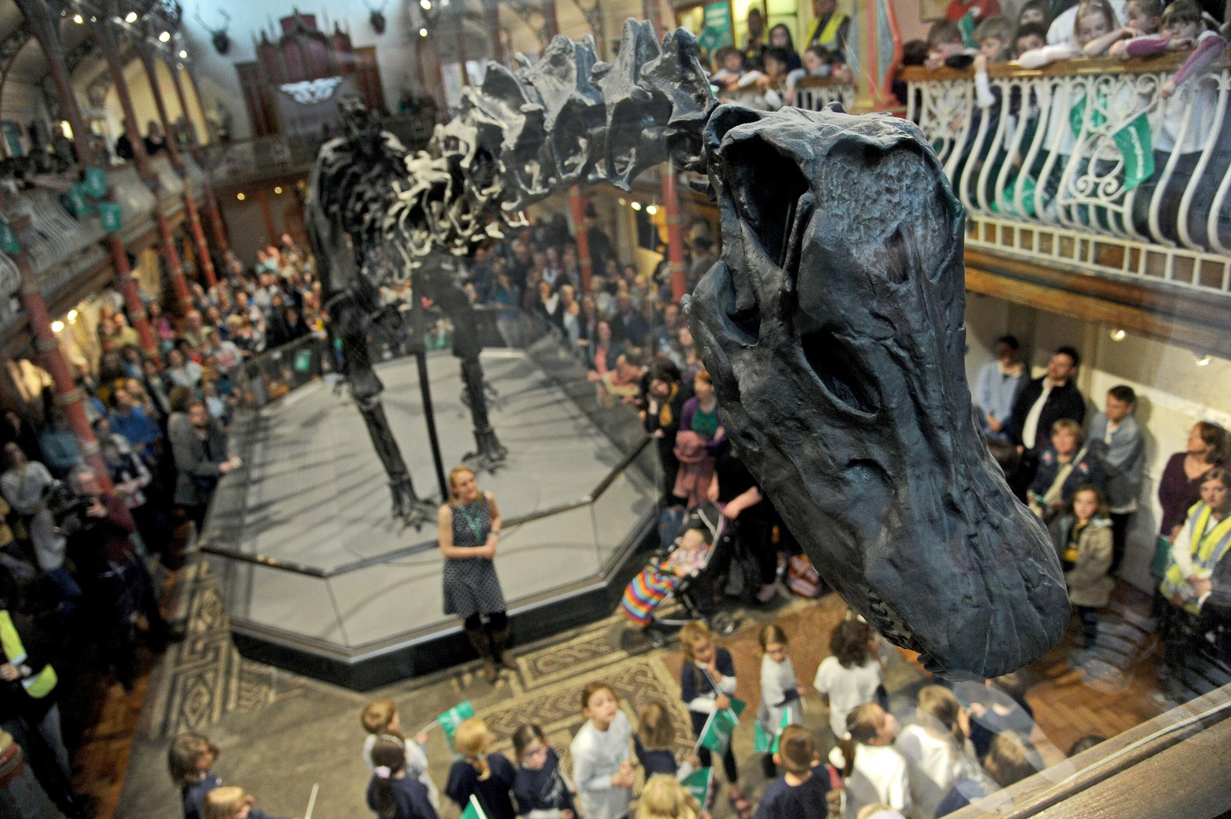 Dorset County Museum award for hosting Dippy
