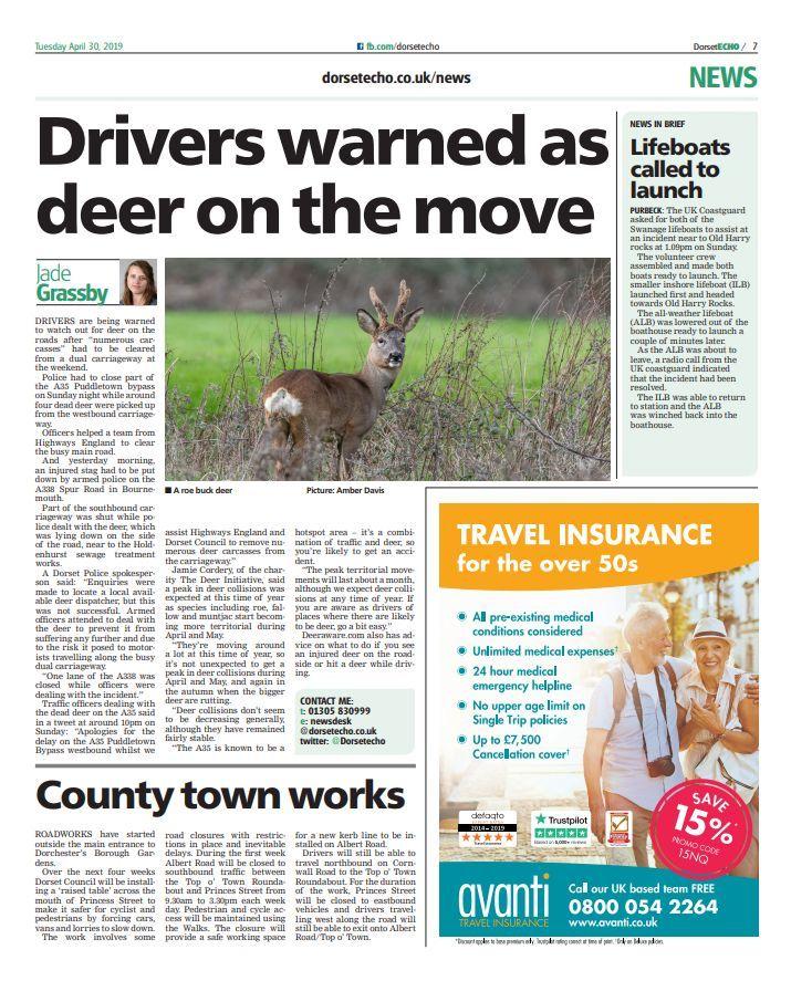 Readers' thoughts after drivers warned to look out for deer on Puddletown Bypass