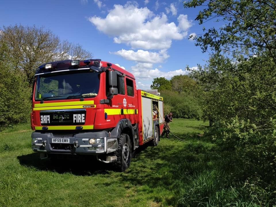 Bridport fire crew can't get stubborn cat out of a tree