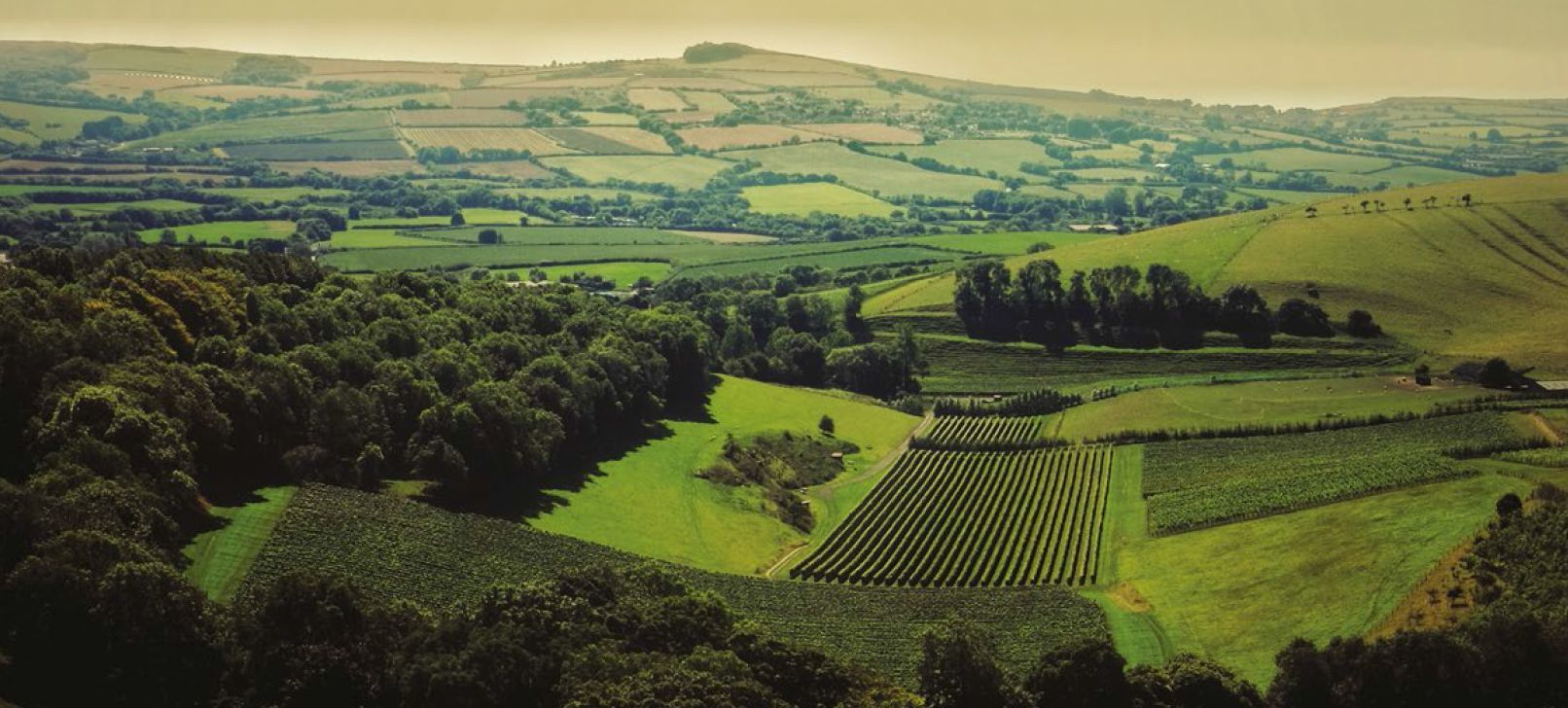 Wine lovers are invited on a vineyard trail