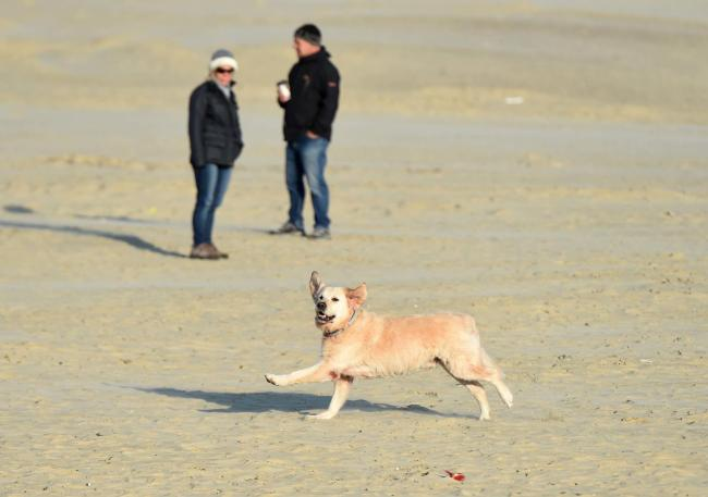 Dog walkers on Weymouth beach, 23/10/2016, PICTURE: FINNBARR WEBSTER/F18460