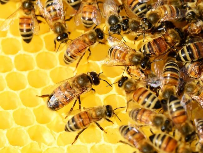 n The festival is aiming to raise awareness of bees                Picture: PIXABAY