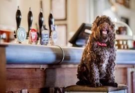 Judges are hoping to snuff out Dorset's most friendly pub
